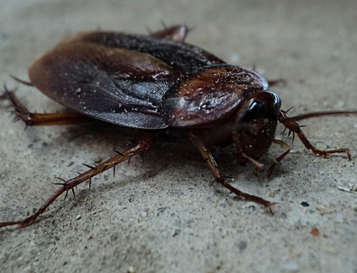 Tips for removing cockroaches in your home